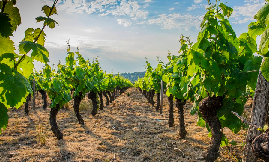 French Wine Regions Beaujolais