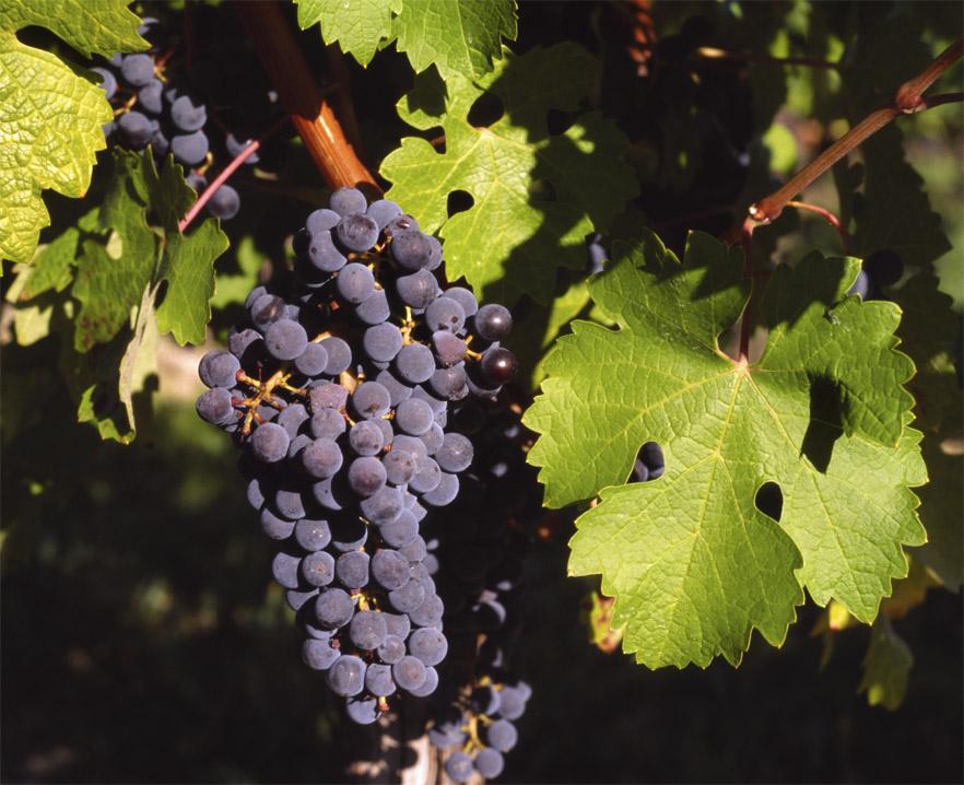 Bordeaux Wine Region France