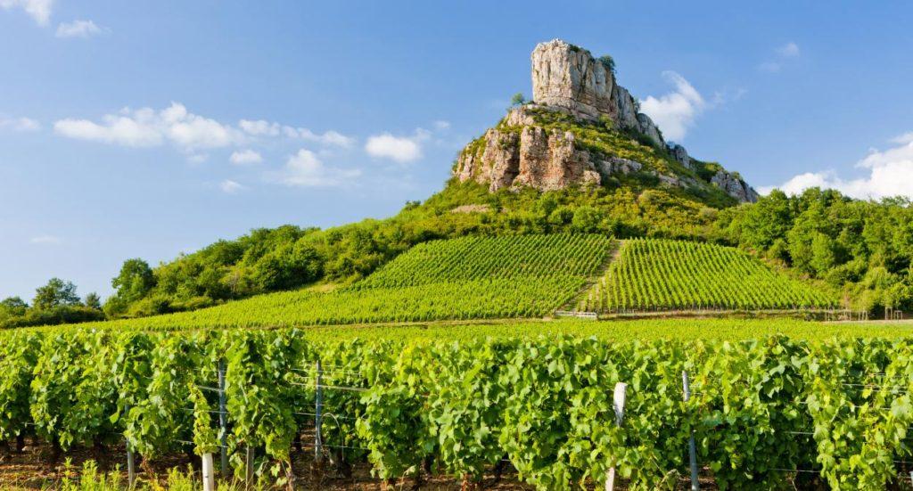 Bourgogne (Burgundy) Wine Region France