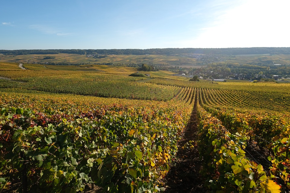Champagne Wine Region France