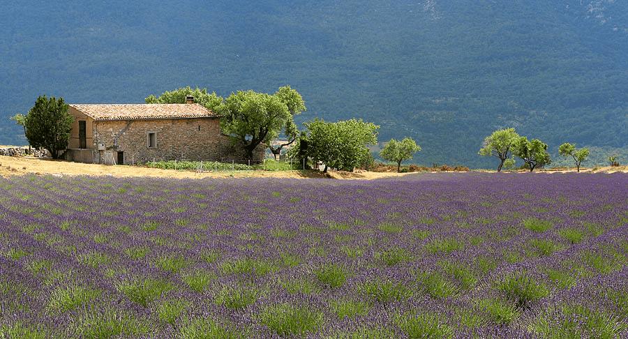 Provence Wine Region France