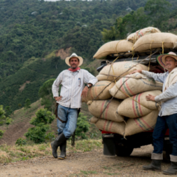 where is coffee grown in Latin America Coffee Terroir