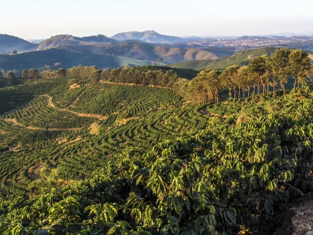 South American Coffee Growing Regions
