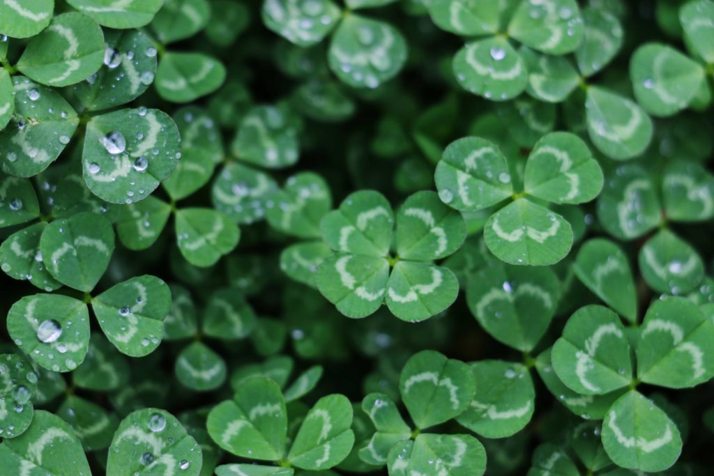 History of the Shamrock Symbols of St. Patrick's Day