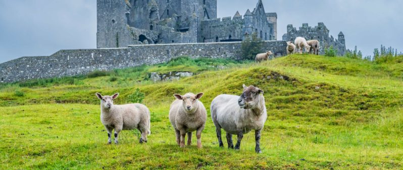 learn history irish language GAEILGE