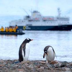 Where Do Accents Come From? Antarctic accents