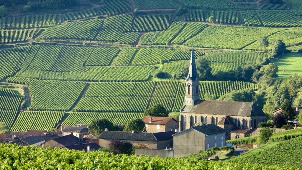 Bourgogne Burgundy wine region france