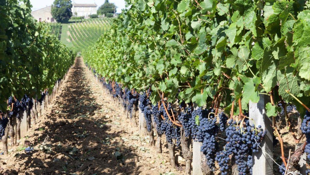 Bordeaux French Wine Region