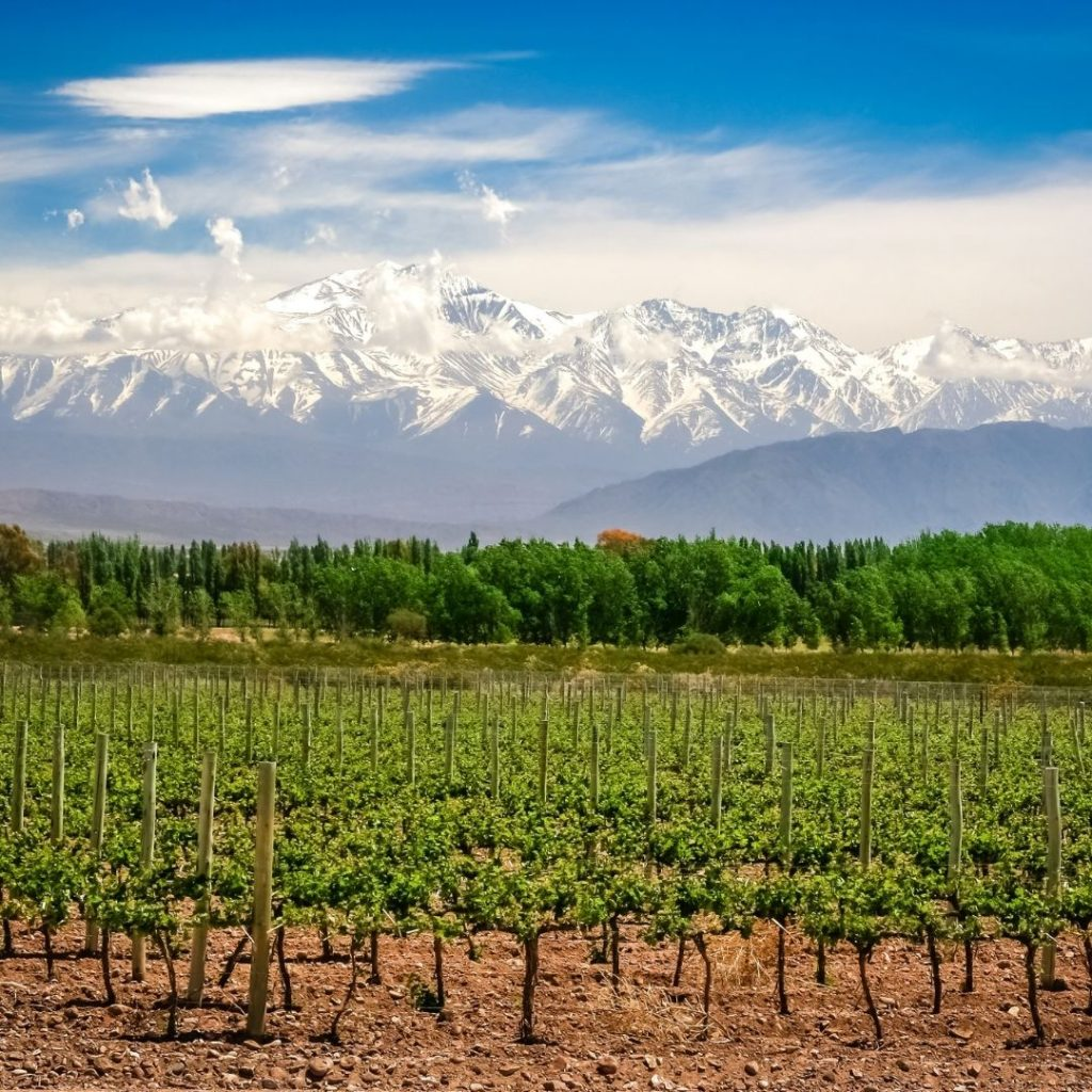 Wines of Argentina South America