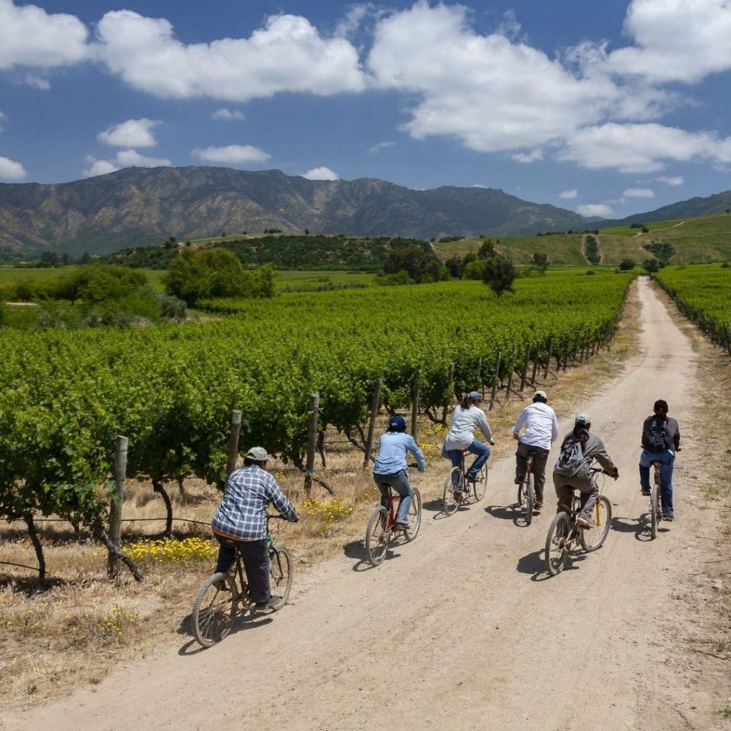 Chilean Wine Vineyards Regions